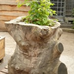 Stump Planter2