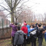 Heald Place School – All About Trees Session