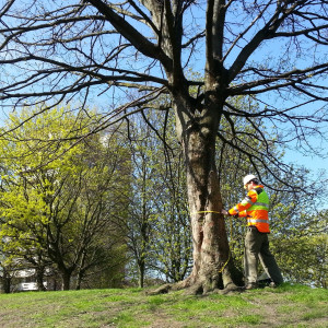 Recording tree characteristics