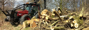 Hazardous trees clearance