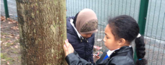 All About Trees Session – Heald Place School