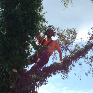 Domestic treework