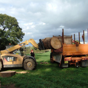 Timber harvest from essential treework
