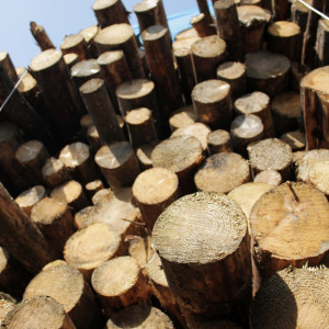 Air drying softwood for biomass chip